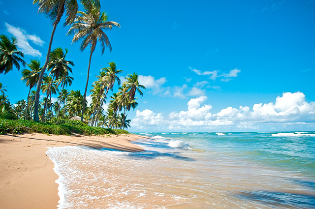 Vista do mar e dos coqueiros